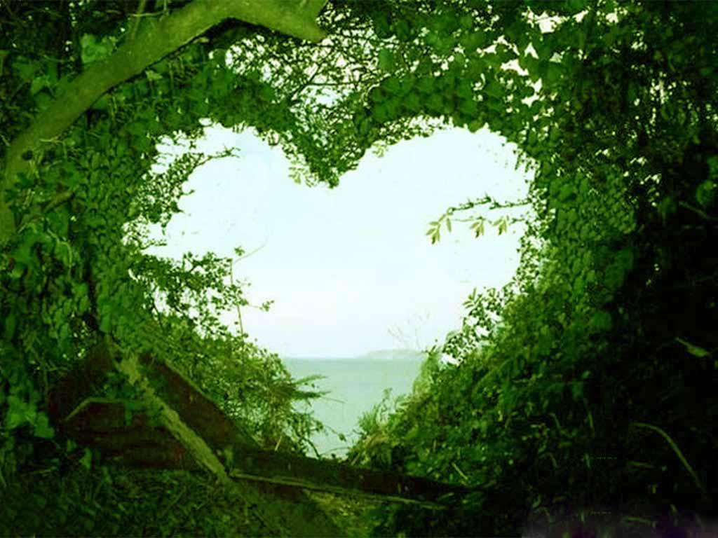 Hearttreev2